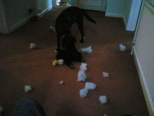 Megan Knocks the Stuffing out of Monkey