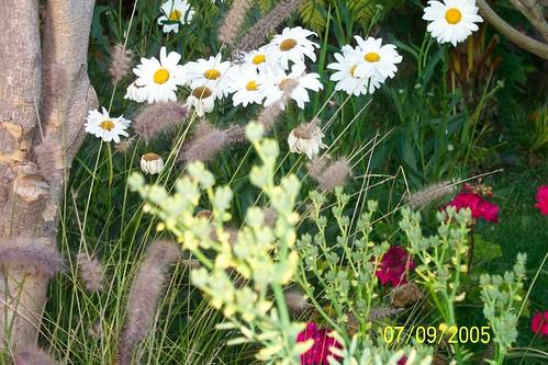 flowers7-9-05