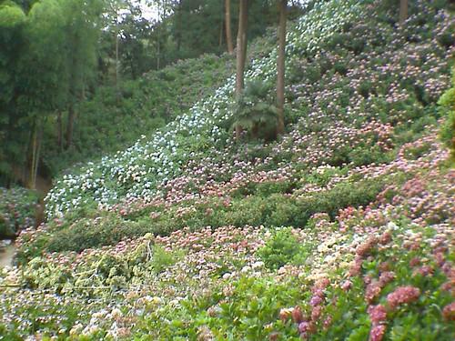 Many Many Flower