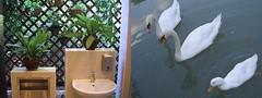 toiletswan