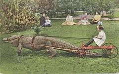 Florida Transportation