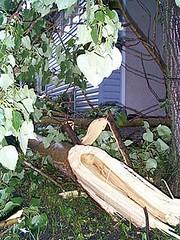 windstorm-treedown1