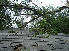 tree-roof