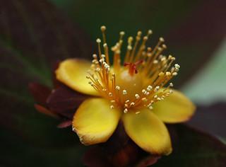 bright blossum | by macrophile