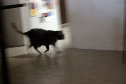 Predator on the Move