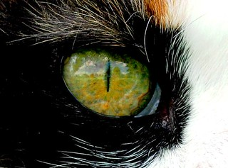 Cat's Eye | by CaptPiper