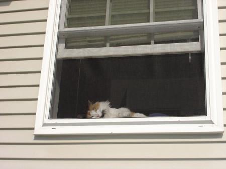 ripley-window-2