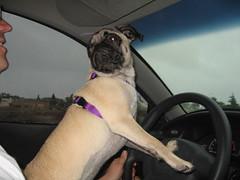 Layla, stunt driver