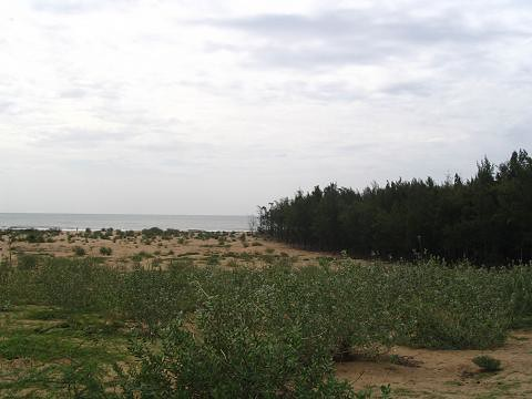 Beach View with Bamboo trees