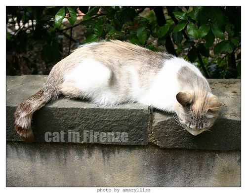 cat-firenze0608-10