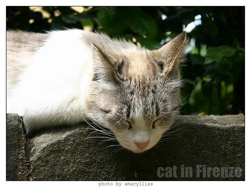 cat-firenze0608-13