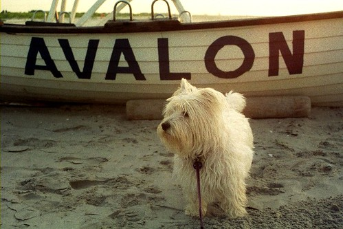 Avalon, July 2004