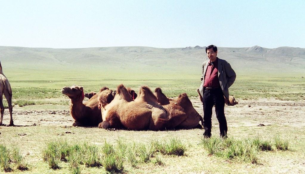 Camel hearding