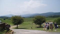 Oasis Winery Landscape