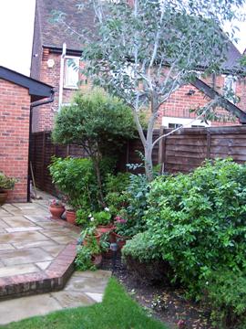 Roe garden UP
