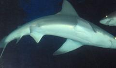 shark tank (11)