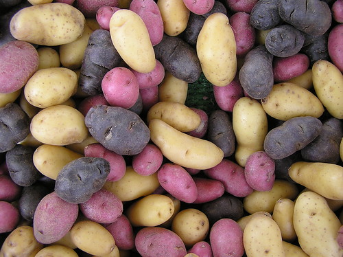 Colorful Potatoes   by libraryman