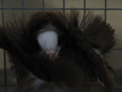 Strange Birds - Part 1