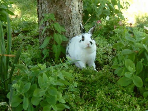 rabbit garden 5