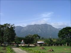 Masinagudi Resort