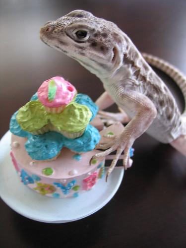 Celebrating Ollie's Hatch Day