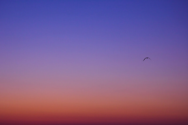 Sunset Gradient And Bird John Watson Flickr