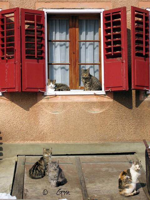 Les 5 chats !