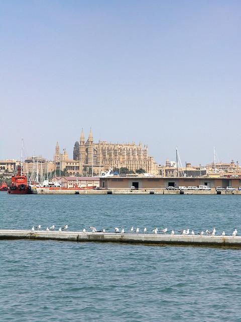 Seagulls in Palma de Mallorca