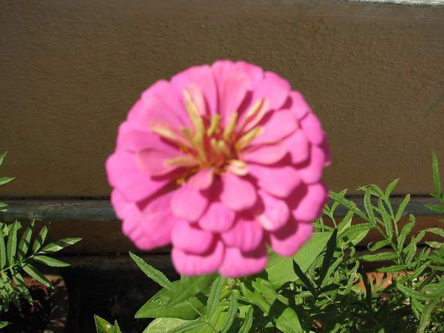 Moi Garden