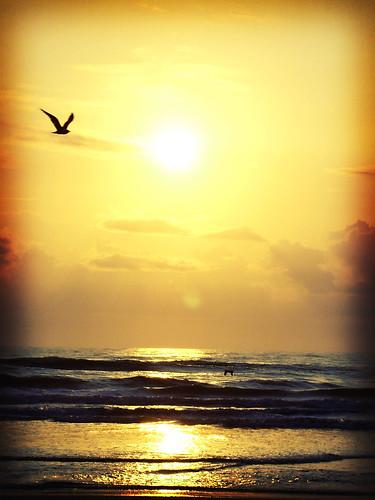 sky sun bird beach clouds florida jacksonvillebeach explored