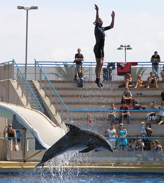 Marineland - dolphin power 2