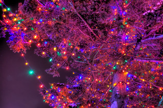 Lights in the Purple Tree - Festi Lumiere at the Quebec City Aquarium | by haban hero
