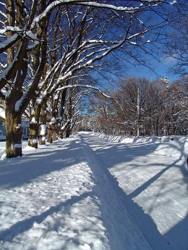 street trees snow kids shadows gang snowfall