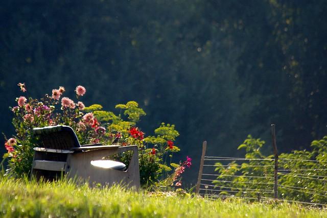 Ławka w ogrodzie / Garden bench