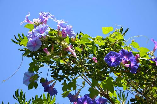 (13) Le Parc du Mugel et son jardin exotique - La Ciotat 32991332572_16bdf7d9e7