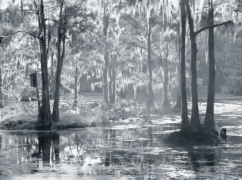 wood autumn blackandwhite bw usa lake color colour reflection tree fall nature wet water forest swim sunrise dark landscape dawn la harbor boat leaf moss stem texas underwater unitedstates flood harbour outdoor tx south scenic calm landing southern spanish bayou swamp lousiana mysterious sw mystical cypress shelter float caddo mystic drown rhythm uncertain afloat deluge firstlight tejas deepsouth submerge spinney coppice underwoods bestoftexas