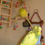 2006-05-04 T&T Snoozing.jpg