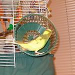 2006-09-22  C Tootee in Wheel.jpg