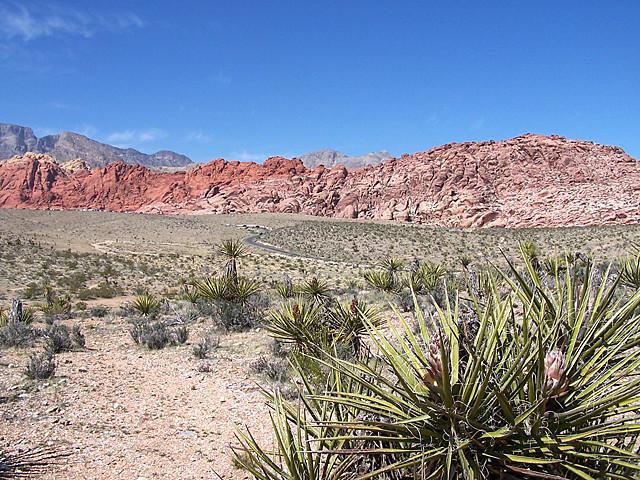 Red Rocks 3.jpg