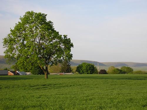 trees mountains tree backyard scenery pennsylvania farmland berkscounty