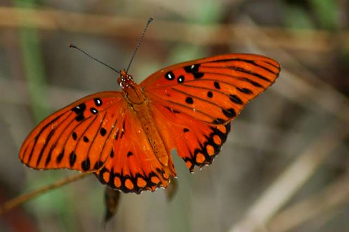 orange beach nature butterfly insect outdoors shore wound grandisle