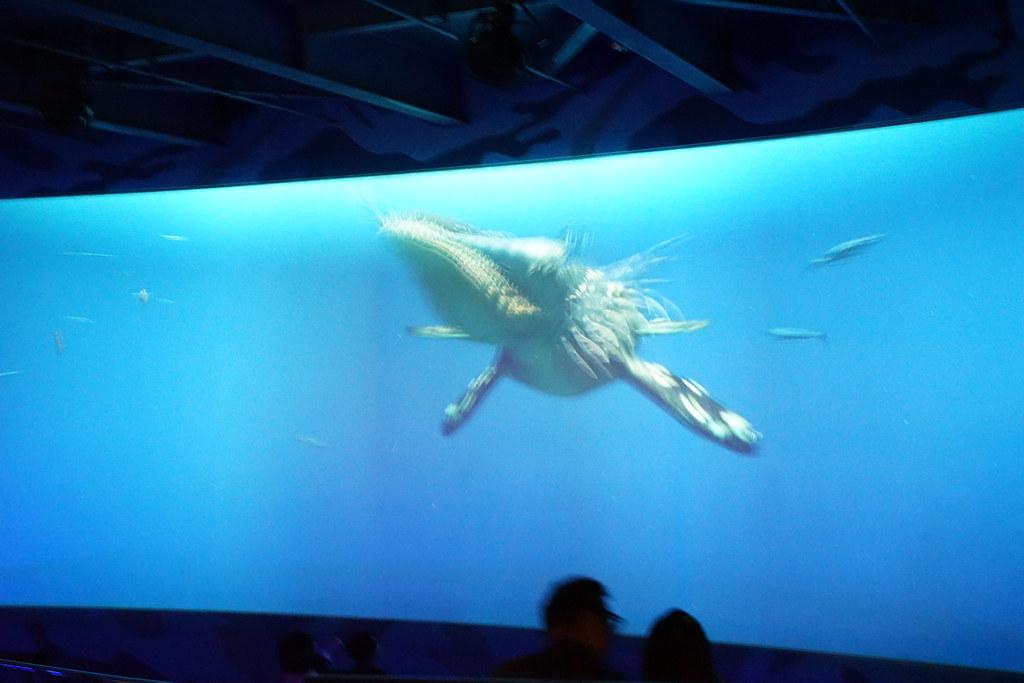 国立海洋生物博物館_32