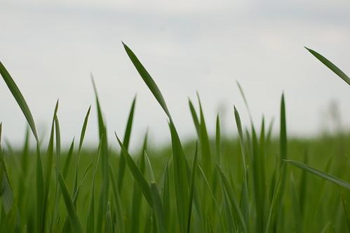 sky grass focus