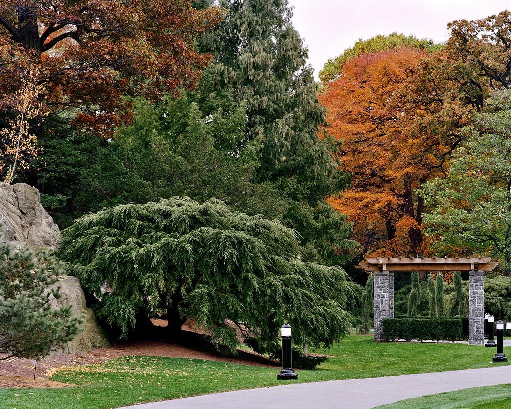Benenson Ornamental Conifers Benenson Ornamental Conifers Flickr