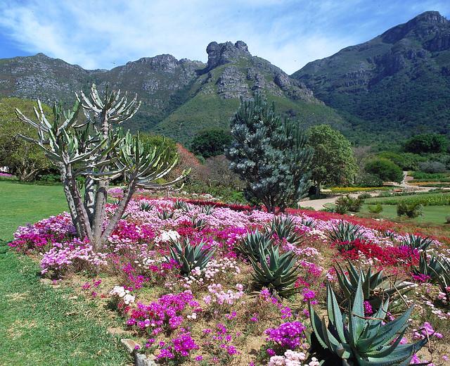 Kirstenbosch Gardens - South Africa