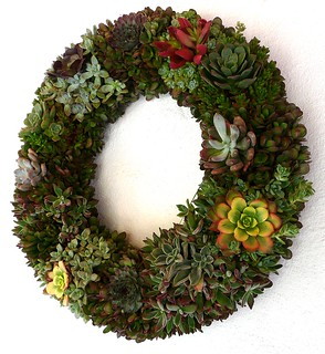 Succulent Evergreen Wreath | by Jack English