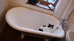 Cat Bath | by nick farnhill