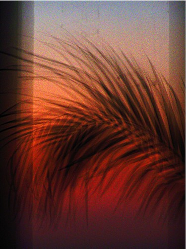 sunset india palm bombay mumbai betterthangood
