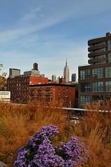 Chelsea High Line