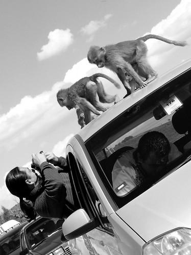 Monkey Bussines